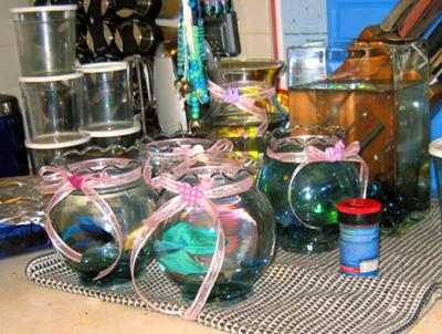 Fishies Waiting for the Bridal Shower